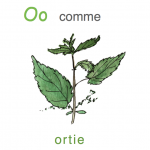o-comme-ortie-im